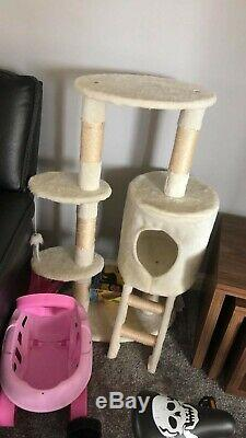 Persian Cat with litter tray, play house